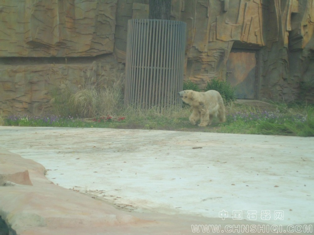 北京动物园北极熊_北京动物园