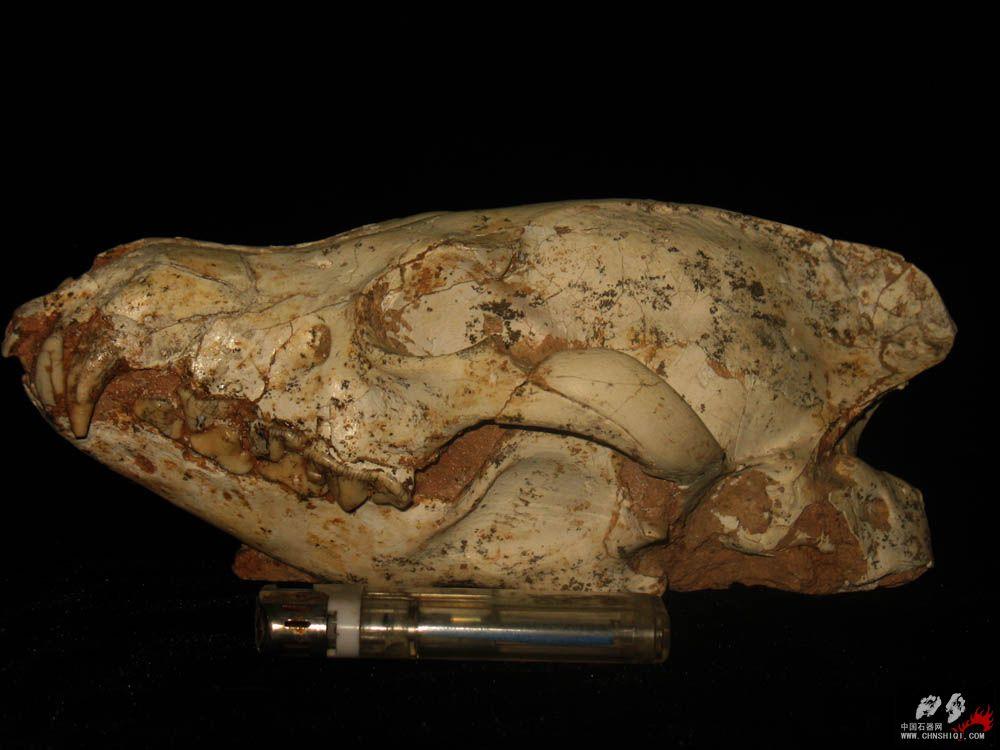 鼬鬣狗.jpg