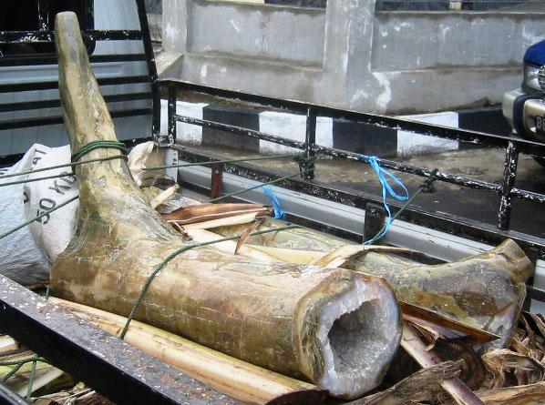 大铸型硅化木